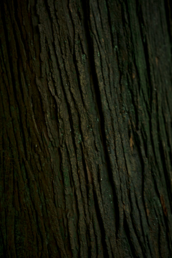 Tree Bark, Nature, Daniella Guzzo Photography